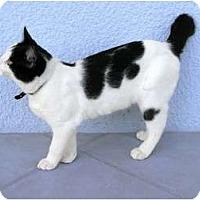 Adopt A Pet :: Bo Bobaloo - Naples, FL