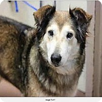 Adopt A Pet :: Rita - Riverside, CA