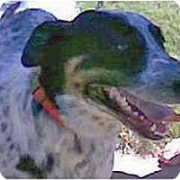 Adopt A Pet :: Bob - Scottsdale, AZ