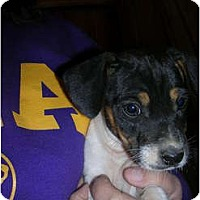Adopt A Pet :: Arlo - Glastonbury, CT