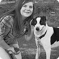 Adopt A Pet :: Wendi - Wilmington, DE