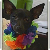 Adopt A Pet :: Sabrina - Baton Rouge, LA