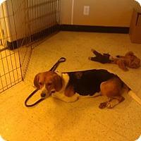 Adopt A Pet :: Kanga - Kendall, NY