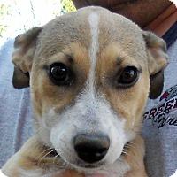 Adopt A Pet :: Baby Linda (the Lovebug) - Oakley, CA