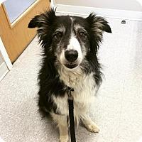 Adopt A Pet :: Dare - Saskatoon, SK
