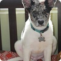Adopt A Pet :: Puddin' - MEET HER! - Norwalk, CT