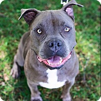 Adopt A Pet :: Bentley - Mission Viejo, CA