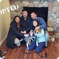 Adopt A Pet :: Owen Alexander-ADOPTED - Northville, MI