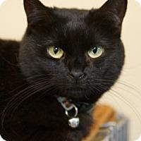 Adopt A Pet :: Lady - Medford, MA