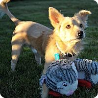 Adopt A Pet :: Spock - Windermere, FL