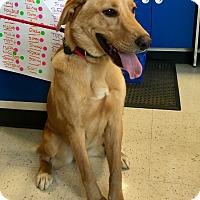 Adopt A Pet :: Casper in CT - Manchester, CT
