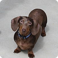 Adopt A Pet :: Towknee (Tony) - Louisville, CO