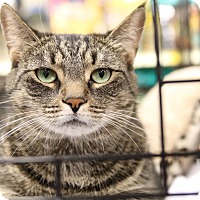 Adopt A Pet :: Snickers - Gainesville, VA