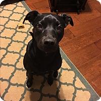 Adopt A Pet :: Venus - Humble, TX