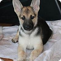Adopt A Pet :: Ahrielle - San Diego, CA