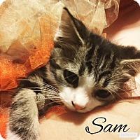 Adopt A Pet :: Sam - Zanesville, OH