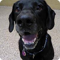 Adopt A Pet :: Sunshine #2 aka Sonny - Midlothian, VA