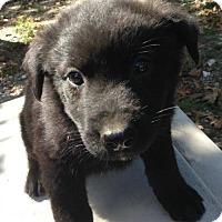 Adopt A Pet :: Tai - Louisville, KY
