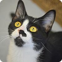 Adopt A Pet :: Frida - San Leon, TX