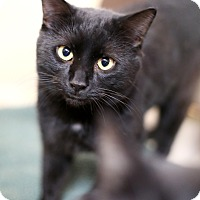 Adopt A Pet :: Tipton - Appleton, WI