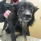 Adopt A Pet :: Tiberius