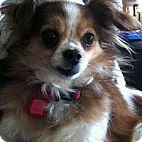 Adopt A Pet :: Freckles - Saskatoon, SK