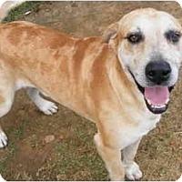 Adopt A Pet :: Buddy - Gonzales, TX