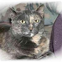 Adopt A Pet :: Kiki - Montgomery, IL