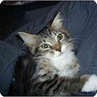 Adopt A Pet :: Ellie Mae - Boca Raton, FL