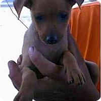 Adopt A Pet :: TIGER - dewey, AZ