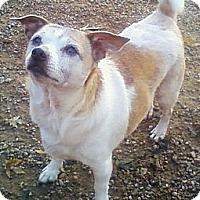 Adopt A Pet :: Walter - Toledo, OH