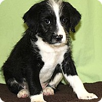 Adopt A Pet :: *Noah - PENDING - Westport, CT
