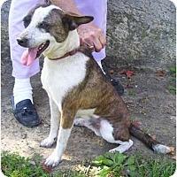 Adopt A Pet :: Rudy - P, ME