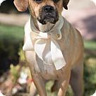 Adopt A Pet :: Benzsma