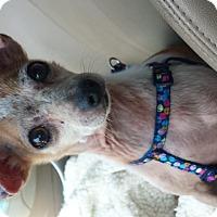 Adopt A Pet :: Rocko - Fowler, CA