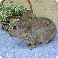 Adopt A Pet :: Henry - Bonita, CA