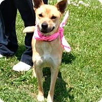 Adopt A Pet :: AMELIA - Leland, MS
