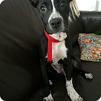 Adopt A Pet :: JOSIE - EDEN PRAIRIE, MN