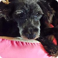 Adopt A Pet :: Betsy - Spartanburg, SC