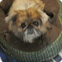 Adopt A Pet :: Wocky - Oakdale, TN