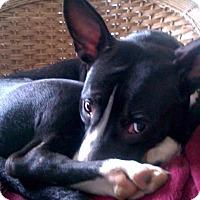Adopt A Pet :: Sadie - Homer, NY
