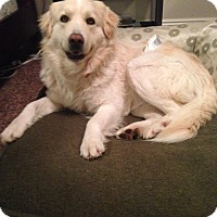 Adopt A Pet :: Nebo - Salt Lake City, UT