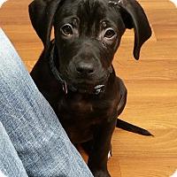 Adopt A Pet :: Buckaroo - Lisbon, OH