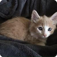 Adopt A Pet :: Spud - Gainesville, FL