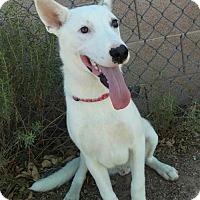 Adopt A Pet :: Cricket - Mesa, AZ