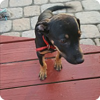 Adopt A Pet :: Toby - East Windsor, NJ
