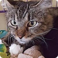 Adopt A Pet :: Fagan - Salisbury, MA