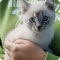 Adopt A Pet :: KK16 Ursa - ADOPTION PENDING - Northville, MI