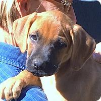 Adopt A Pet :: Willow - beautiful girl - Pewaukee, WI