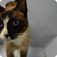 Adopt A Pet :: Gold - Hudson, NY